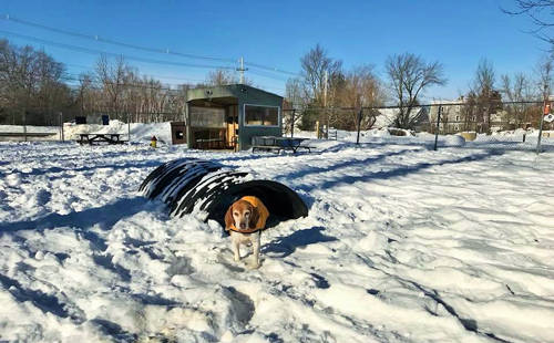 dog playing in dog park during winter