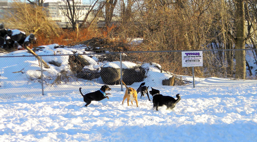 Group of dogs playing at dog park in winter